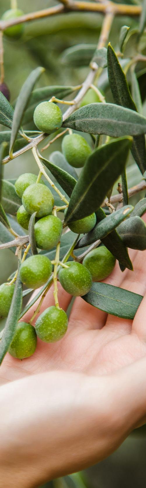 Olistori - Portuguese oil company- Olive oil cellar - Olistori